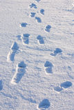 Human footprints in snow Royalty Free Stock Image