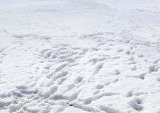 Human footprints in the snow Royalty Free Stock Photos