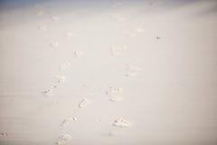 Human footprints on the white sandy beach Stock Image