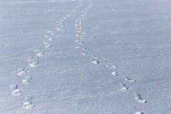 Human footprints on white snow as a background.  royalty free stock images