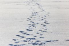 Human footprints on white snow as a background.  stock photo
