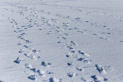 Human footprints on white snow as a background.  royalty free stock image