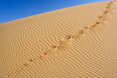 Human footprints on the yellow sand Stock Photos