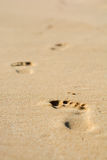 Human footsteps. On atlantic fine beach sand Stock Image