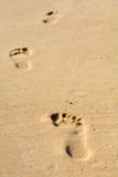 Human footsteps Royalty Free Stock Photo