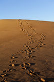 Human footsteps in the sand dunes. Of Erg Chebbi in the Sahara Desert, Morocco stock photo