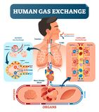 Human gas exchange system vector illustration. Oxygen travel from lungs to heart, to all body cells and back to lungs as CO2. Red blood cells transporting Royalty Free Stock Image