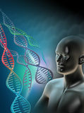Human Genome. Computer artwork showing  a double stranded DNA (deoxyribonucleic acid) molecules. DNA is composed of two strands twisted into a double helix. DNA Royalty Free Stock Image