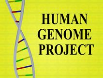 HUMAN GENOME PROJECT concept. 3D illustration of HUMAN GENOME PROJECT script with DNA double helix , isolated on colored background royalty free stock photos