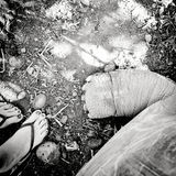 Human and giant tortoise legs Royalty Free Stock Image