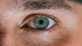 Human Green Eye Stock Photos