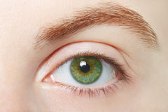 Human, green healthy eye macro Royalty Free Stock Images