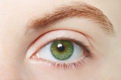 Human, green healthy eye macro Royalty Free Stock Images