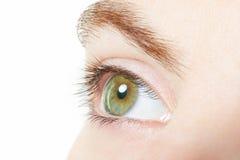 Human, green healthy eye macro Stock Image