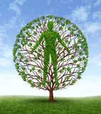 Human Growth. And development and personality development as a medical symbol of health as a tree with branches and green leaves in the shape of a persons Royalty Free Stock Photo