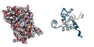 Human growth hormone (HGH) vector illustration