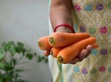 Human had holding  fresh raw orange color carrots. Human had holding fresh raw orange color carrots Royalty Free Stock Photo