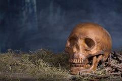 Human Halloween Skull Stock Photography