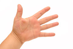 Human Hand. Photograph of a human hand shot in studio against a white background Royalty Free Stock Photo
