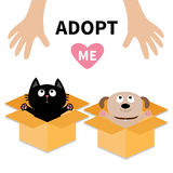 Human hand. Adopt me. Dog Cat inside opened cardboard package box. Ready for a hug. Puppy pooch kitten cat looking up to pink hear Royalty Free Stock Image