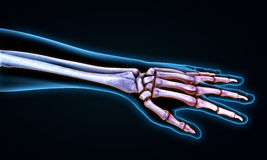 Human Hand Anatomy Illustration Stock Image
