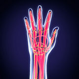 Human Hand Anatomy Illustration Royalty Free Stock Photos