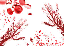 Human Hand Blood Cells Vessels Royalty Free Stock Photography