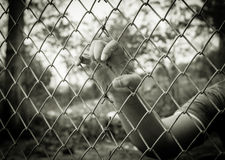 Human hand in the cage, Royalty Free Stock Photos