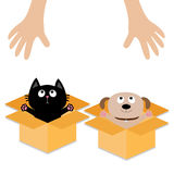 Human hand. Dog Cat inside opened cardboard package box. Ready for a hug. Puppy pooch kitten cat looking up to pink heart. Pet ado Stock Images