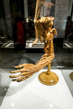 The Human hand at the exhibition Stock Photography