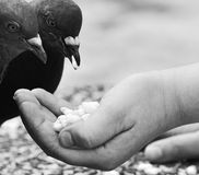 Human hand feeding the bird. Stock Photos