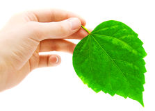 Human hand and green leaf Royalty Free Stock Photos