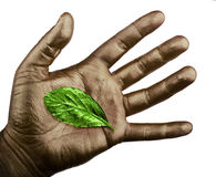 Human hand with green leaf isolated on white background Royalty Free Stock Images