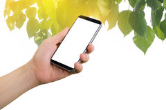 Human hand hold on smartphone with blank screen on green leaf and golden light background effect. Royalty Free Stock Photos