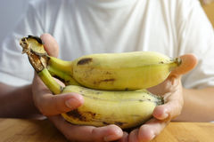 Human hand holding a bunch of bananas Royalty Free Stock Photo