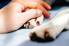 Human hand holding dog paw Royalty Free Stock Images