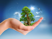 Human hand holding green landscape Royalty Free Stock Image
