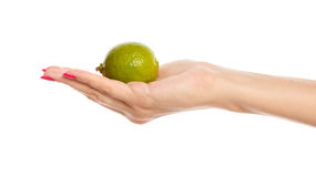 Human hand holding green lime Royalty Free Stock Images
