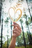 Human hand holding heart-shape grass flower. Love concept for Valentine` Day. Human hand holding heart-shape grass flower design for love symbols on blurred royalty free stock image