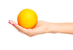 Human hand holding orange Stock Photography