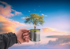 Human hand holding perfect growing tree royalty free stock photo