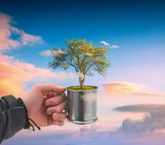 Human hand holding perfect tree royalty free stock image