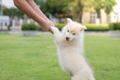 Human hand holding puppy's paw Stock Photos