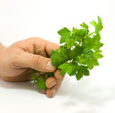Human hand holding raspberry leaves Stock Photo