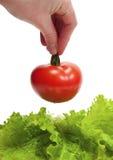 Human hand  holding tomato Stock Photo