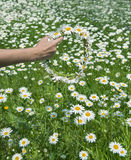 Human hand holding wreath of daisy flowers Royalty Free Stock Image