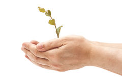 Human hand holding  young plant Stock Image