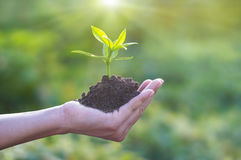 Human hand holding young plant with soil on nature background, Ecology Stock Image