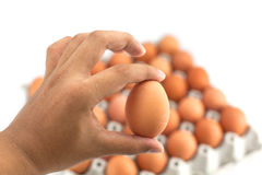 A human hand holds an egg Royalty Free Stock Images