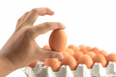 A human hand holds an egg Stock Images